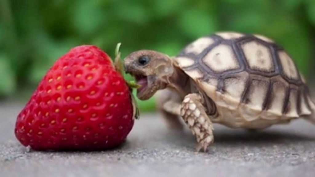 Everything you need to know about Turtle Foods