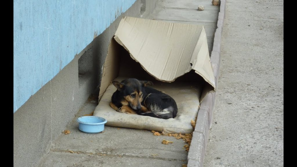 homeless dog shelter